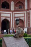 A monkey at the Taj Mahal sits on top of an informational sign. royalty free stock photography