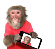monkey taking a selfie and smiling at camera Royalty Free Stock Photo