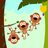 Monkey teamwork Stock Image
