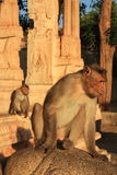 Monkey Temple (Hanuman) in Hampi, India. Royalty Free Stock Photography