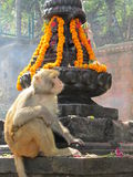 Monkey Temple Nepal Stock Photography