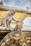 Monkey on the temple in Nepal Royalty Free Stock Photos