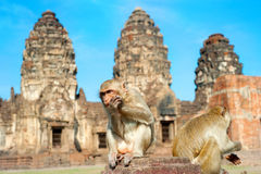 Monkey Temple Stock Photo