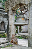 Monkey in temple Royalty Free Stock Photography