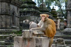 Monkey Temple Stock Images
