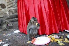 Monkey Thailand Stock Photos