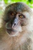 Monkey, Thailand. Free monkey on thailand beach Royalty Free Stock Photos