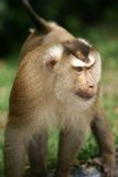 Monkey Stock Photography