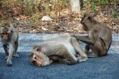Monkey at Thailand Stock Photo