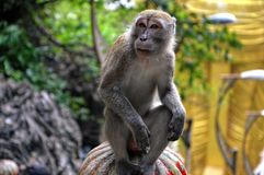 Monkey thinking on a pillar in Kuala Lumpur. royalty free stock photography