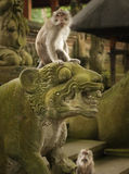 Monkey on a tiger. Monkey sitting on a tiger or lion statue in Monkey forest Ubud Bali Stock Photo