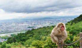 Monkey on top of trunk in Arashiyama, kyoto Stock Photo
