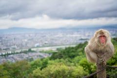 Monkey on top of trunk in Arashiyama mountain, kyoto Stock Image