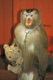 Monkey with toy Royalty Free Stock Image