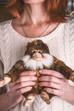 Monkey toy in the woman hands Stock Photo