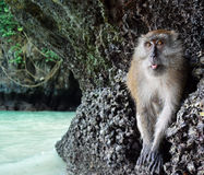 Monkey travelers. The monkey want to go to the next beach Stock Photo