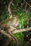 Monkey on the tree stock photo
