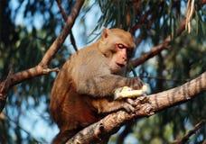 Monkey on tree Stock Image