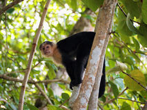 Monkey on tree Stock Photos