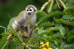 Monkey on the tree. Branch stock photo