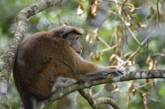 Monkey. At tree in a forest Stock Image