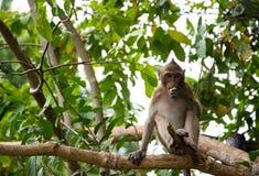 A monkey on the tree stock photo