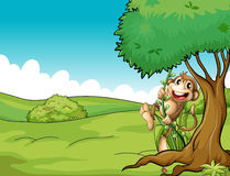 Monkey and tree Stock Images