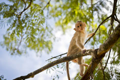 Monkey on a tree. Stock Photos