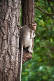 Monkey on the tree; Stock Photos