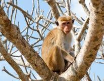 A monkey on a tree Stock Photos