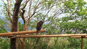 Monkey on tree stock video