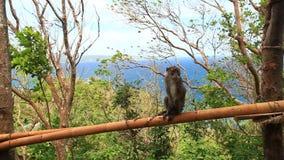 Monkey on tree stock video footage