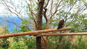 Monkey on tree stock footage