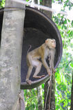 Monkey on tree Stock Photos