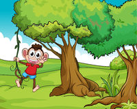 Monkey and trees Stock Photography