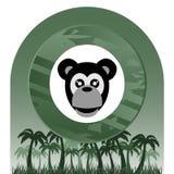 Monkey tropical Stock Photos