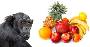 Monkey and tropical fruits Royalty Free Stock Photos