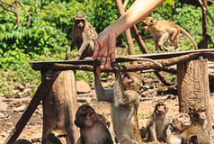 Monkey tuch hand women Royalty Free Stock Photography