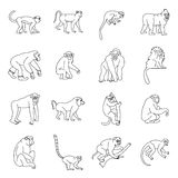 Monkey types icons set, outline style. Monkey types icons set. Outline illustration of 16 monkey types vector icons for web Vector Illustration