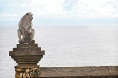 Monkey on Uluwatu Temple Royalty Free Stock Photos