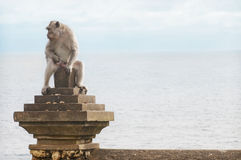 Monkey on Uluwatu Temple Royalty Free Stock Photography