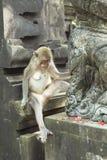 Monkey in Uluwatu Temple, Bali Island Stock Images