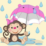 Monkey and umbrella. Greeting card Monkey and umbrella Stock Photo