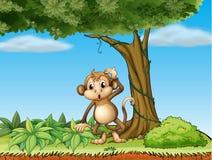 A monkey under a big tree Royalty Free Stock Photos