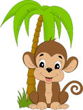 Monkey under palmtree Royalty Free Stock Images