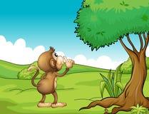 A monkey Royalty Free Stock Photos