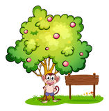 Monkey under tree beside empty wooden board Royalty Free Stock Images