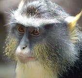 Monkey. An upclose shot of monkey Stock Image