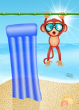 Monkey on vacation Stock Photo