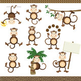 Monkey in varying positions Royalty Free Stock Image